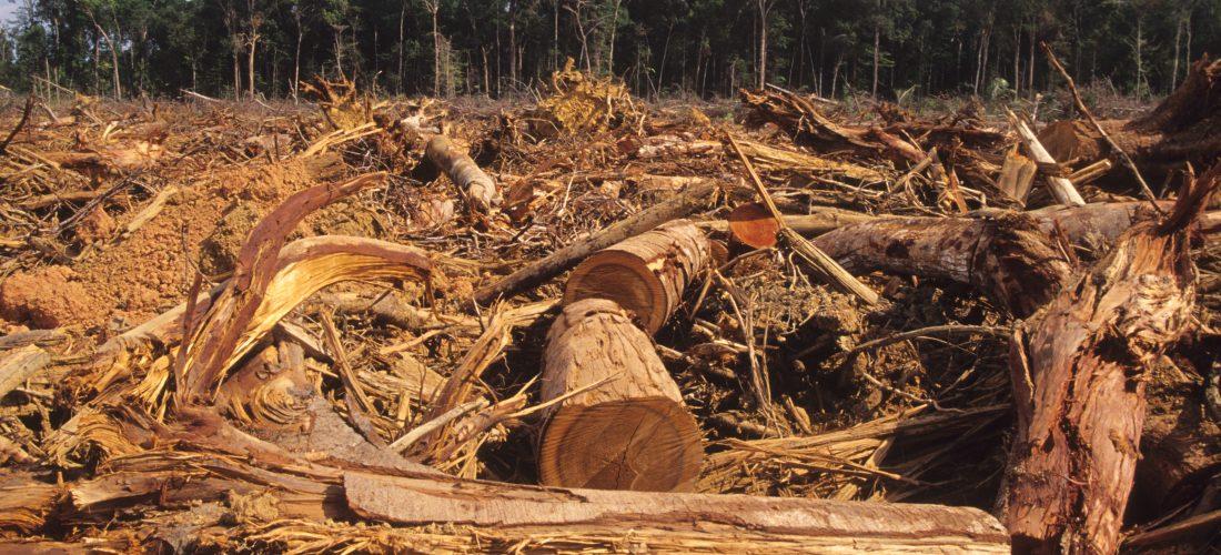 Eine gerodete Waldfläche